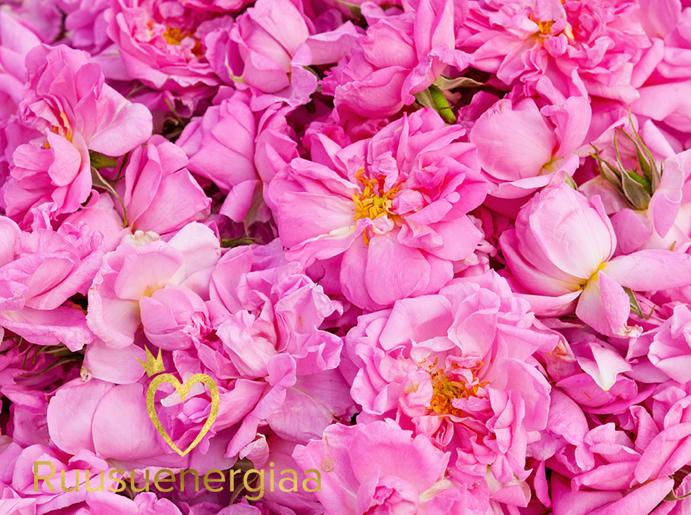 Ruusuvesi – 7 parasta ruusuveden käyttövinkkiä aikuiselle naiselle