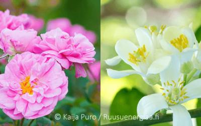 Ruusuvesi vai appelsiininkukkavesi – ja arvonta