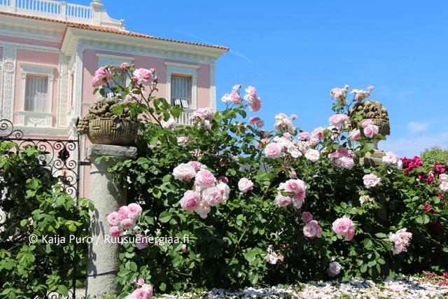 Ruusut Ranskan Rivieralla Villa Ephrussi ruusuenergiaa.fi