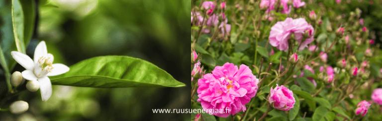 Ruusuvesi-vai-appelsiininkukkavesi Ruusuenergiaa.fi Kaija Puro